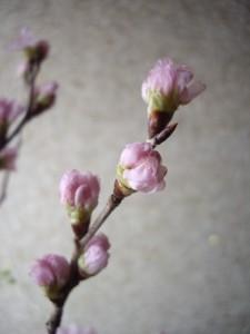 ☆雪の日の記念日に届けられたお花6☆