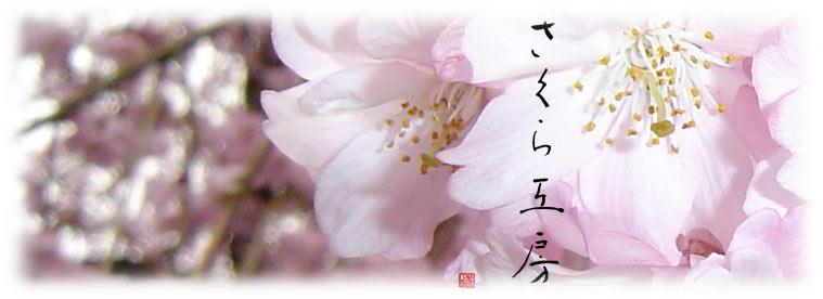 さくら工房 絹服(kimono-fuku)